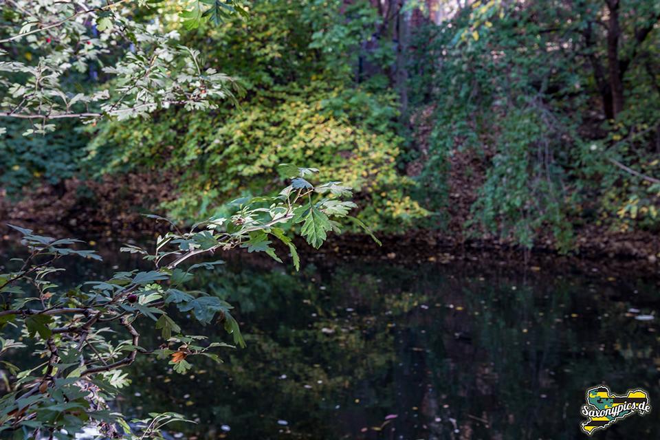 Grün im Herbst