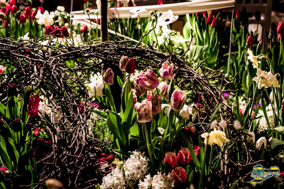 Dresdner Frühling im Palais_09