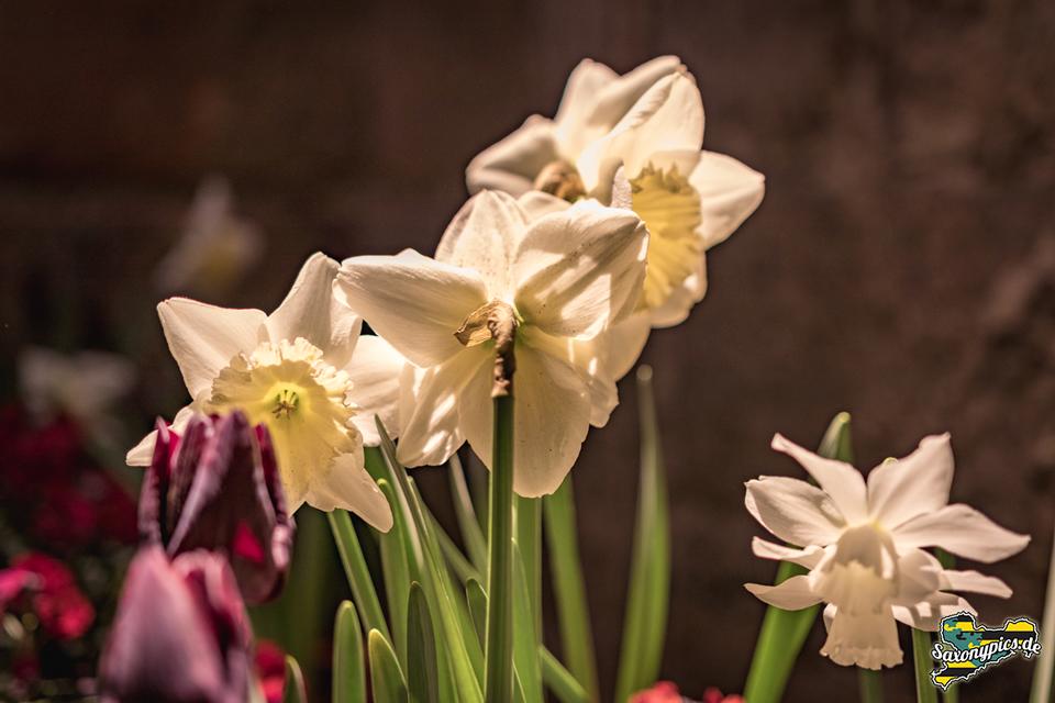 Dresdner Frühling im Palais_10