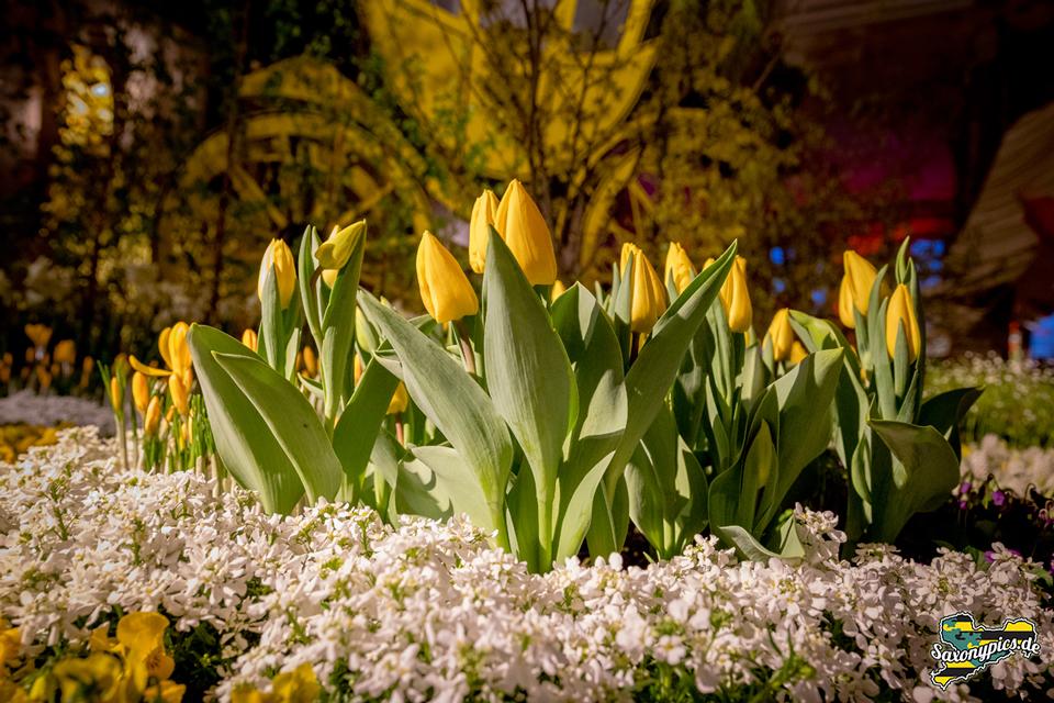 Dresdner Frühling im Palais_11
