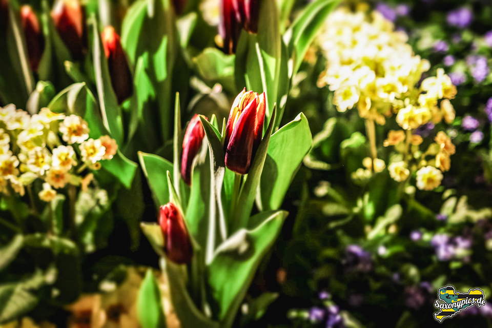 Dresdner Frühling im Palais_12